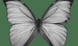 Butterfly_b&w