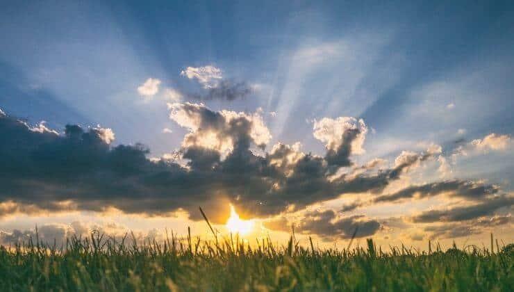 La verità di un filo d'erba