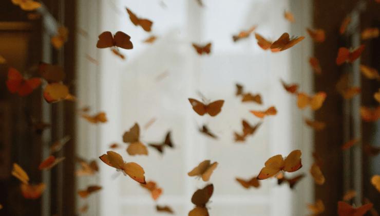 Inseguendo farfalle